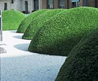 Grass Dome Images