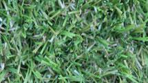 Lux Lawn