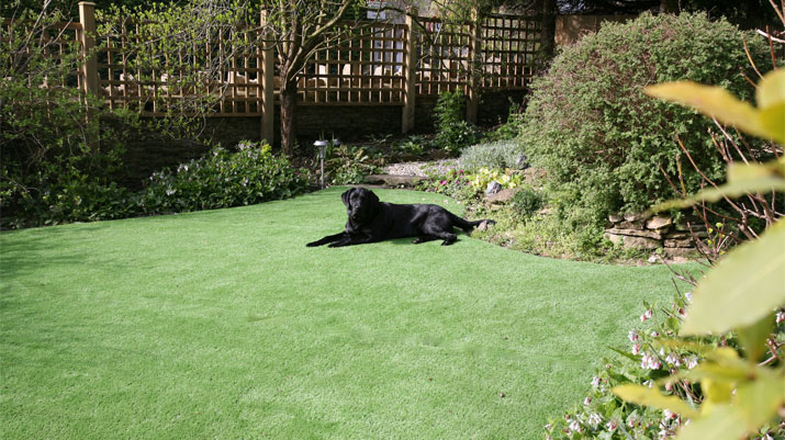 black dog on grass